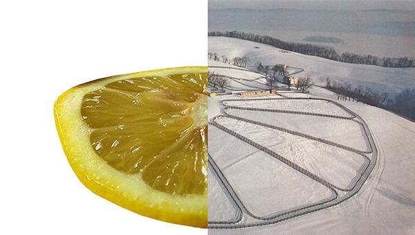 Lemon slice and snowy field