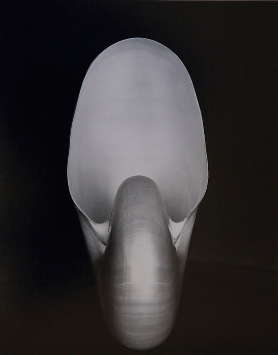 Photograph of a nautilus shell by Edward Weston
