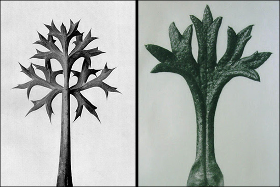 black and white photos of plant forms