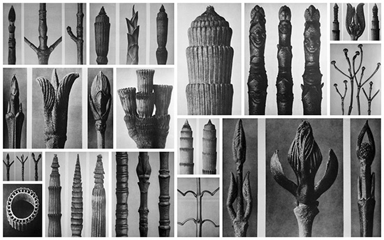 Photographic typology by Karl Blossfeldt