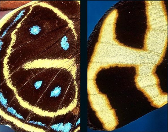 photograph by Kjell Sndved of letters found in butterfly wings