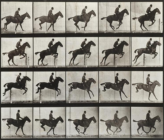 Eadweard Muybridge photographic locomotion study of horse galloping