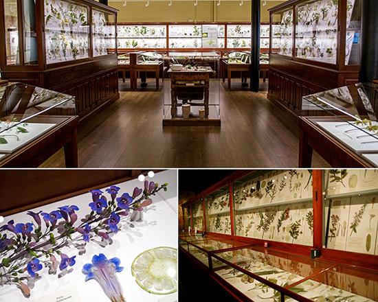 Blaschka scientific models of glass flowers