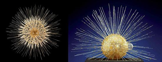 Blaschka glass scientific model, microscopic radiolarians