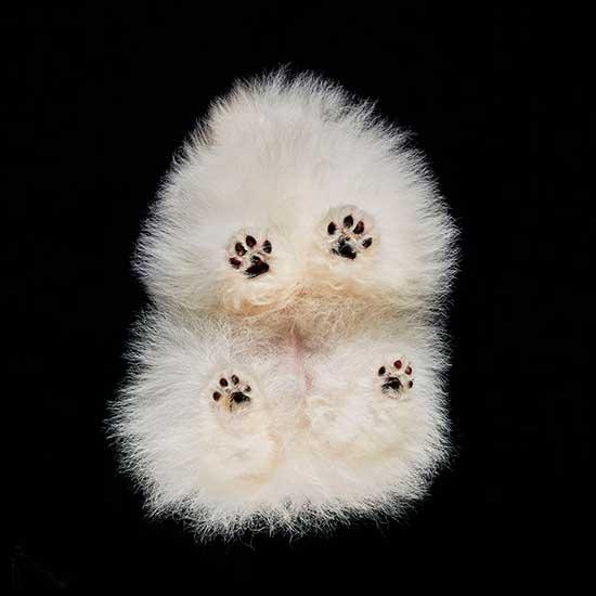 photograph of dog by Andrius Burba